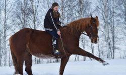 Возрождение конных традиций в Учхозе СПбГАУ