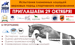 «ЭКВИ-FEST-2021»